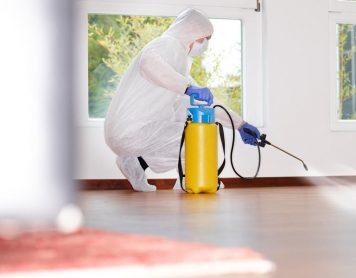 افضل شركة مكافحة حشرات بالرياض 0558949505 بدون مغادرة المنزل اتصل الان