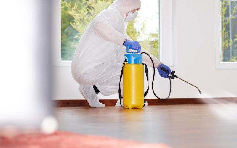 افضل شركة مكافحة حشرات بالرياض 0501014283 بدون مغادرة المنزل اتصل الان